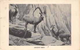 top007533 - Sheep Post Card