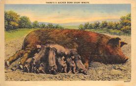 top007561 - Pig Post Card