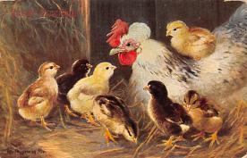 top007627 - Chicken Post Card