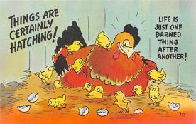 top007633 - Chicken Post Card