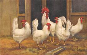 top007669 - Chicken Post Card