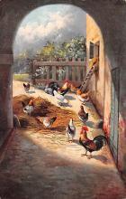 top007683 - Chicken Post Card