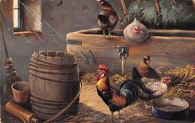 top007691 - Chicken Post Card
