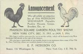 top007695 - Chicken Post Card
