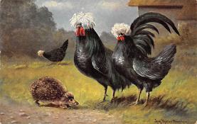 top007699 - Chicken Post Card