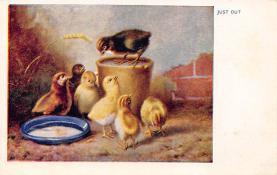 top007735 - Chicken Post Card