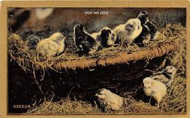top007741 - Chicken Post Card