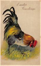 top007747 - Chicken Post Card