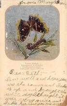 top007821 - Butterflies Post Card, Butterfly Postcard