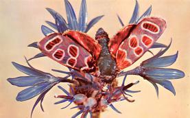 top007891 - Butterflies Post Card, Butterfly Postcard