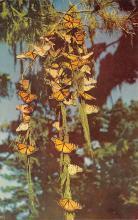 top007933 - Butterflies Post Card, Butterfly Postcard