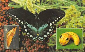 top007945 - Butterflies Post Card, Butterfly Postcard
