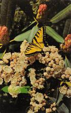 top007963 - Butterflies Post Card, Butterfly Postcard
