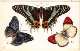 top007965 - Butterflies Post Card, Butterfly Postcard