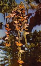 top007985 - Butterflies Post Card, Butterfly Postcard