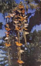top007995 - Butterflies Post Card, Butterfly Postcard