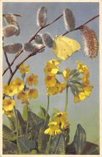 top007999 - Butterflies Post Card, Butterfly Postcard