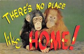 top008213 - Monkey Post Card