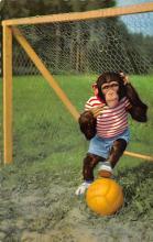top008233 - Monkey Post Card