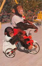 top008245 - Monkey Post Card