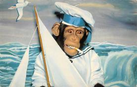 top008251 - Monkey Post Card