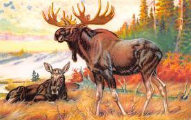 top008417 - Moose / Elk Post Card