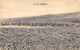 top008425 - Moose / Elk Post Card