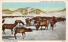 top008433 - Moose / Elk Post Card