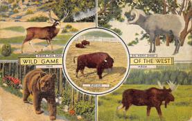 top008435 - Moose / Elk Post Card