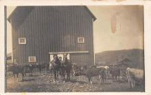top008439 - Cow Post Card