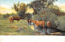 top008455 - Cow Post Card