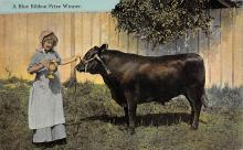 top008545 - Cow Post Card