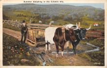 top008571 - Cow Post Card