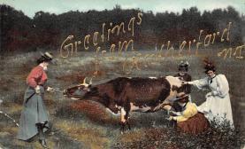 top008603 - Cows