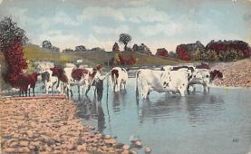 top008615 - Cows