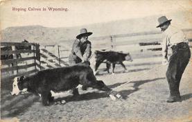 top008645 - Cows