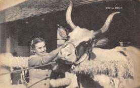 top008649 - Longhorn Steer Bull