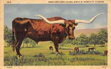 top008651 - Longhorn Steer Bull
