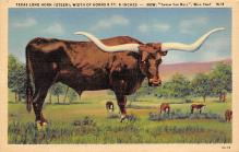 top008663 - Longhorn Steer Bull