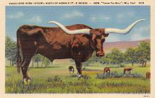 top008667 - Longhorn Steer Bull