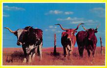 top008669 - Longhorn Steer Bull