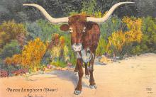 top008671 - Longhorn Steer Bull