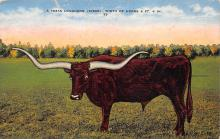 top008673 - Longhorn Steer Bull