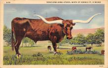 top008675 - Longhorn Steer Bull