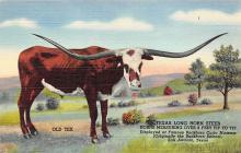 top008677 - Longhorn Steer Bull