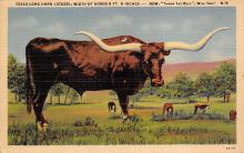 top008679 - Longhorn Steer Bull