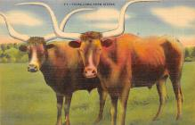 top008689 - Longhorn Steer Bull