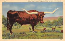 top008697 - Longhorn Steer Bull