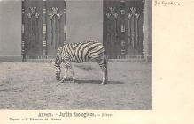 top008709 - Zebra