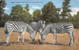 top008713 - Zebra